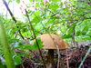 standing alone mushroom