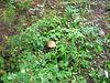 mushroom in greenery