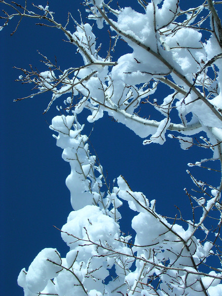 snowday77