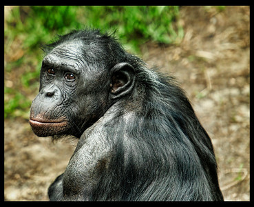 _DSC2507 chimp port