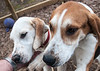 Smyth Pups at home-3975