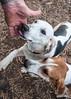 Smyth Pups at home-3971