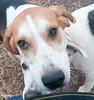 Smyth Pups at home-3992