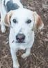 Smyth Pups at home-3955