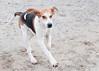 Smyth Pups at home-4026