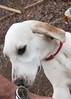 Smyth Pups at home-3940