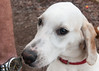 Smyth Pups at home-3941