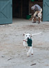 Smyth Pups at home-4011