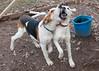 Smyth Pups at home-3917