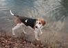 Smyth Pups at home-4046