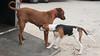 Smyth Pups at home-4021