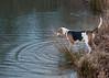 Smyth Pups at home-4056