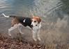Smyth Pups at home-4047