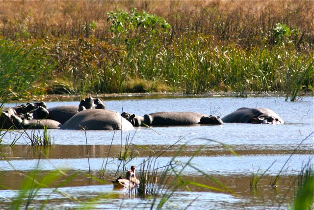 Of course a trip to Africa demands a visit to a nature preserve.  The hippos were the first to greet me.