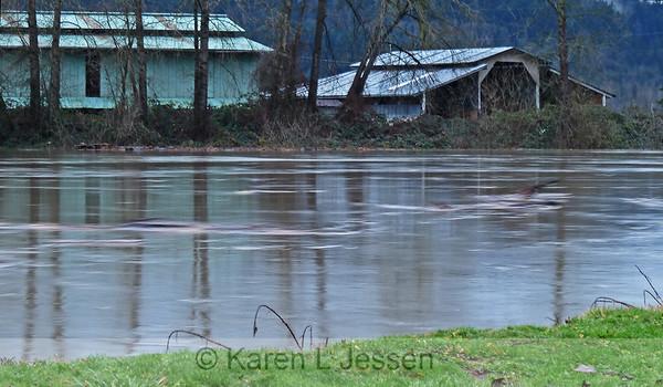 Snoqualmie River Flood 2010