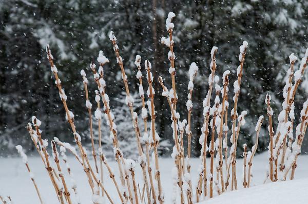 snow 2-2014