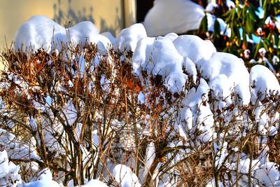 Snow_2016_ 115-1