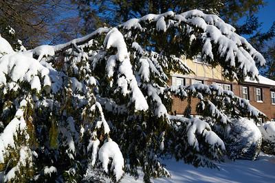 Snow_2016_ 038