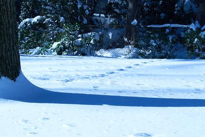 Snow_2016_ 061