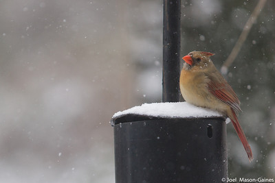 3 March 2014, Birds on a snowy day