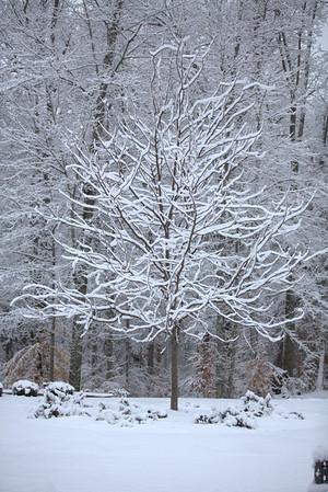Snow Day 12-29-12