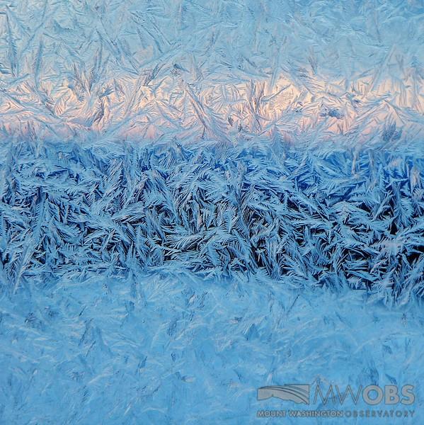 Fern Frost on a window 17 Feb 2015