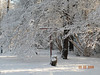 Snow - March 2009 032