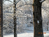Snow - March 2009 020