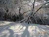 Snow - March 2009 033