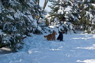 March 2008 Snow Storm 14 030908