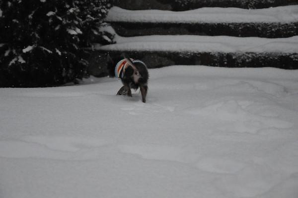Snow man Sledding
