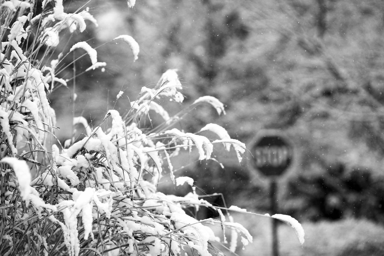 Snow_2010_108