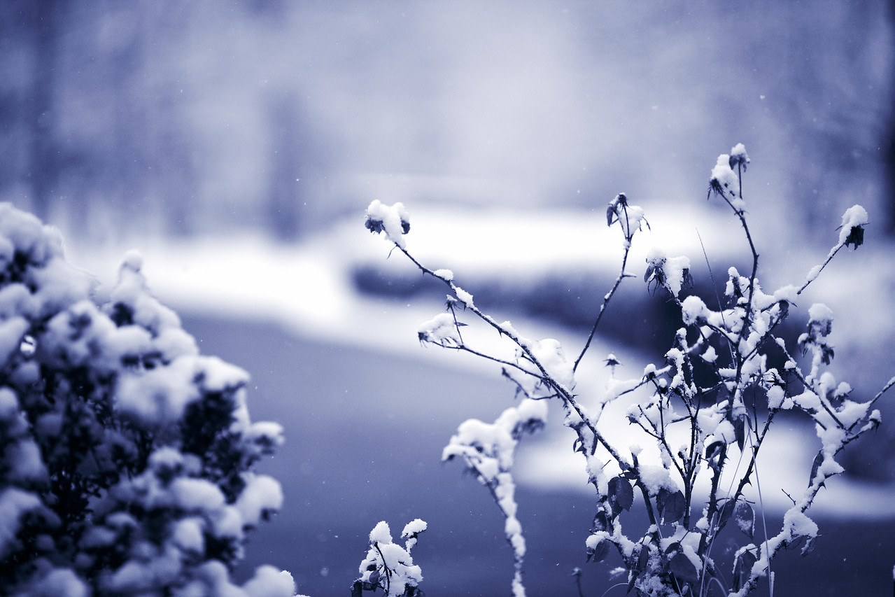 Snow_2010_132