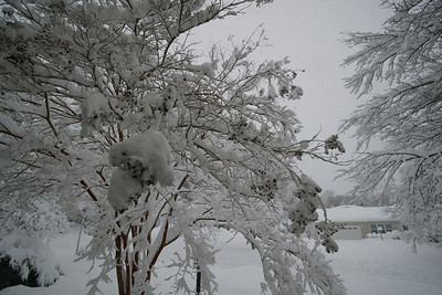 Snowmageddon Rockville MD 2010 record amount of snowfall snow on trees, streets, brunches, drift wind icicles cold freezing miracle of century