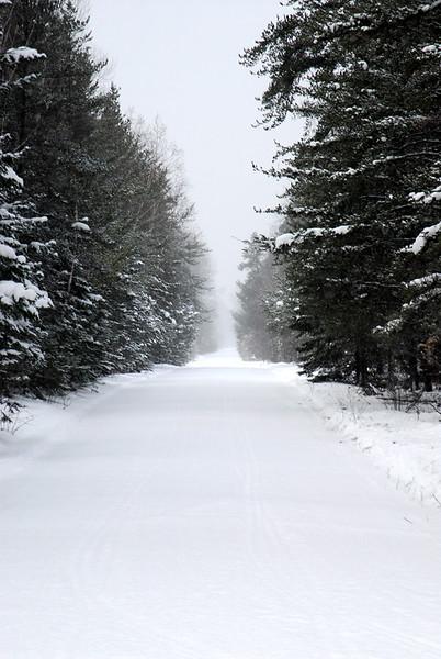 Snowy logging road in Michigan
