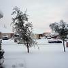 snowinyard12feb10smug