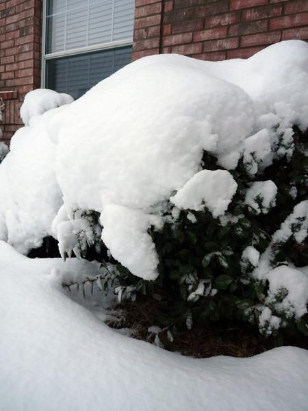snowonshrubs12feb10