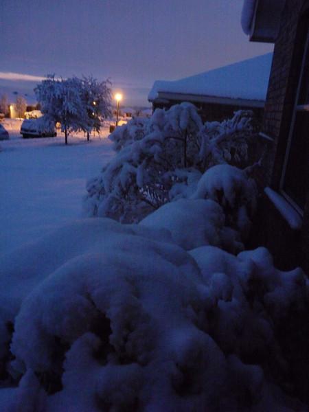 snowpredawn