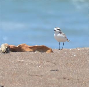 wild life observed on Morro Bay trip