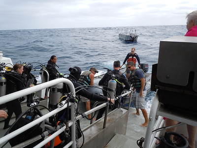 Diving at Rocha was challenging.  Rough conditions, strong currents and no bottom; but a remarkable experience.