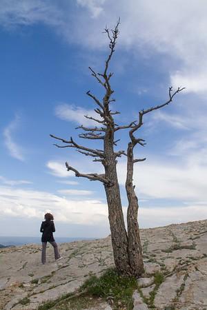 Sandia Peak, near Albuquerque, NM.  July 20, 2014.