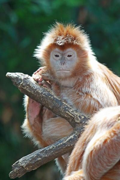 at Bronx Zoo