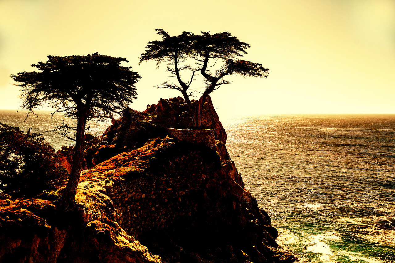 """Lone Cypress"" near Monterey, California"