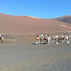 I ain't gettin' on no camel you fool (at Timanfaya National Park).