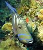 Cayman Aggressor, Day 3 081