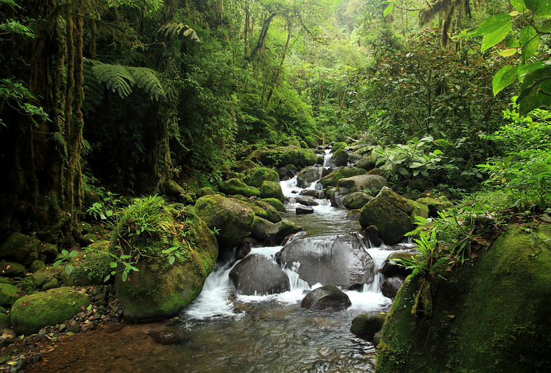 Rio San Lorencito, Alberto Manuel Brenes Biological Reserve.  Unusually low during a La Nina year.