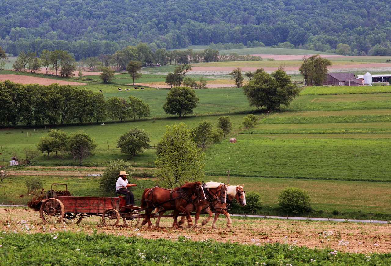 Amish farmer working his fields near Woodward, Pa, on the road to Penn's Creek