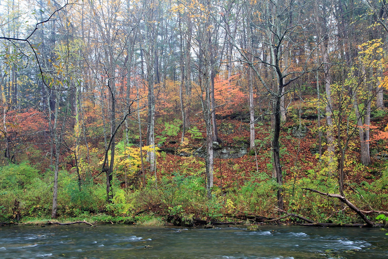 Foggy fall morning on Spring Creek
