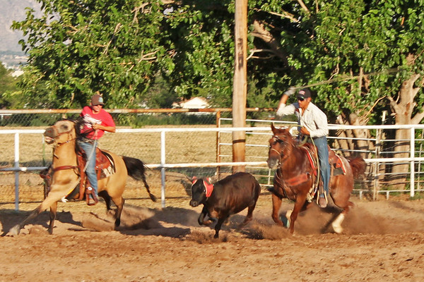 Somersaulting Roping Horse, Tres Milgros Arena, July 17, 2010