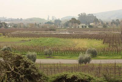 Sonoma - December 2009